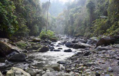 Into Nagaland - forest - Nagaland - Ben Frederick