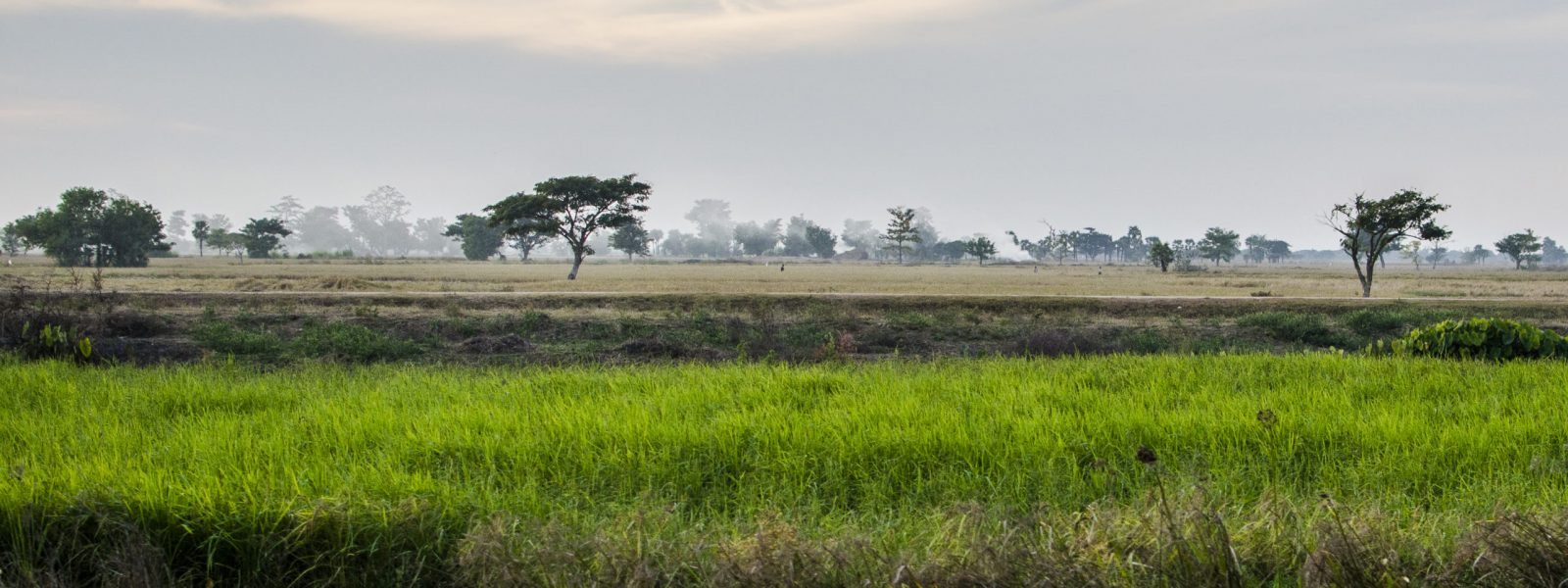 Monywa - paddy fields - Myanmar - Sampan Travel