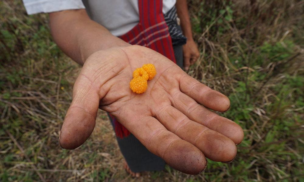 Pindaya - Lahpet Thoke, Burmese Tea Leaf Salad - Pindaya - Sampan Travel