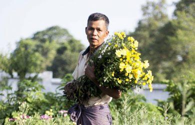 Pyin Oo Lwin - fields of flowers - Myanmar - Sampan Travel