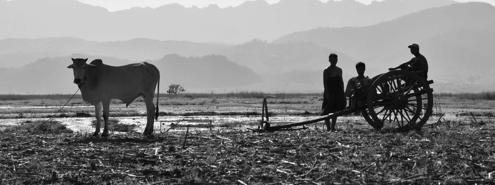 Samkar Lake - farmers - Shan State - Sampan Trave