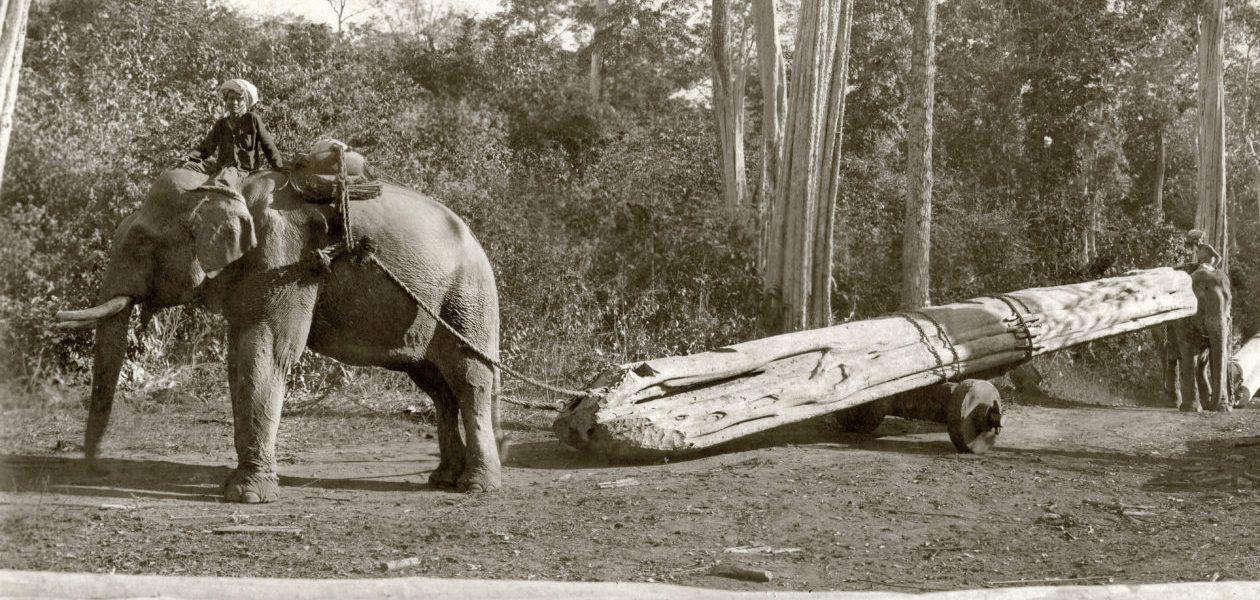 Elephants & Oozies - the Burmese Timber Trade - Myanmar - Sampan Travel