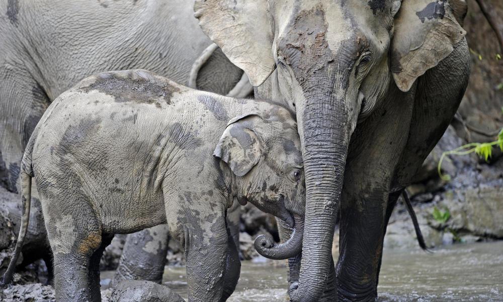 Green Heroes - Elephants - Myanmar - Sampan Travel